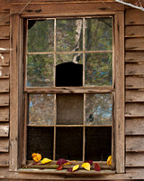 Sharecroppers Window Leaves
