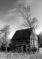 B&W Appomattox Barn and Black Walnut