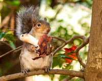 Squirrel Eating Mushroom